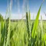 DUT Génie biologique option agronomie