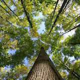 BTSA Gestion forestière